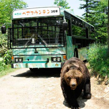 bear-mt03.jpg