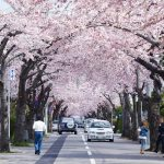 函館桜ヶ丘通り