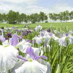 Hakko Gakuen Iris Garden