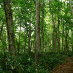道立自然公园野幌森林公园