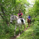 新冠Horoshiri骑马俱乐部