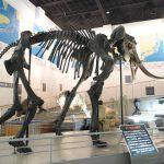 Takikawa Museum of Art and Natural History