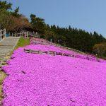 Mt. Yakushi