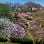 Kitami Flower Paradise