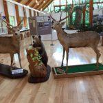 东大雪自然馆