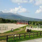 Paard Musée