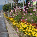 Sawara Flower Road
