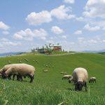 Shibetsu Sheep Farm