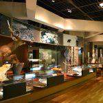 Asahikawa City Museum