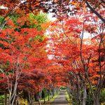 Hiraoka Arboriculture Center