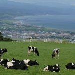 Yakumo Dairy Cattle Rearing Ranch