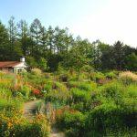 Kaze-no Garden,Prince Grand