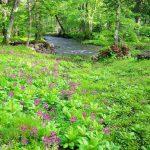 町民の森自然公園(ノンノの森)