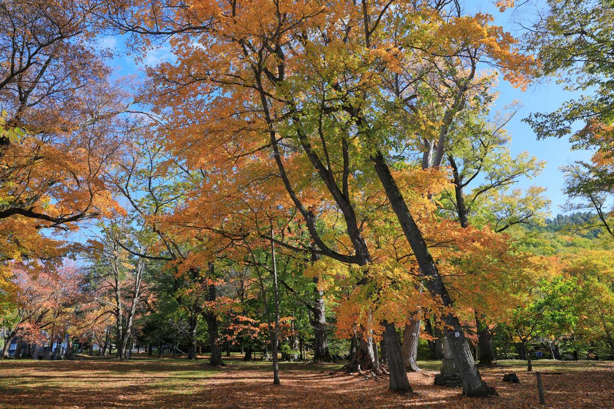 Torinuma Park