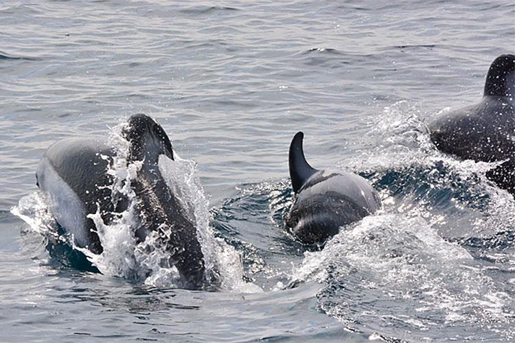 クジラ・イルカ・バードウォッチングクルー